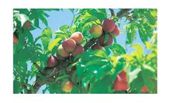 Irrigation solutions for Peach crops