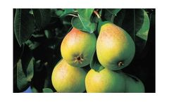Irrigation solutions for Pear crops
