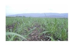 Irrigation solutions for Sugar Cane crops