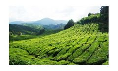 Irrigation solutions for Tea crops
