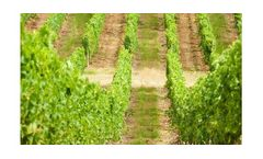 Irrigation solutions for Vineyard crops