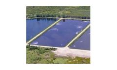 Algae control in wastewater lagoons