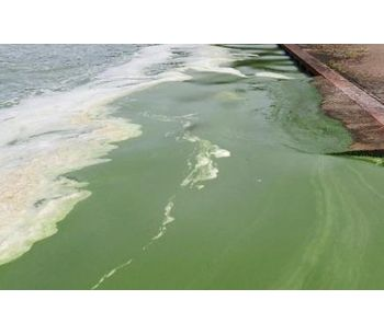Ultrasound for algal bloom control: background, research and effects