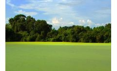 Florida algal bloom crisis: Why the blooms in Florida are more dangerous than you think