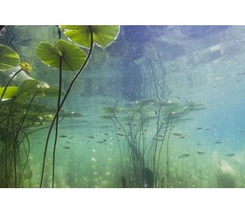 Importance of aquatic plants and algae in a lake's ecosystem