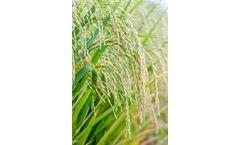 Model Bio 20 - Biostimulant Combining Mineral Nutrition