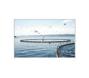 Ozone generators for aquaculture applications - Agriculture - Aquaculture
