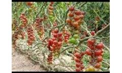 Israel Agriculture Technology: Desert Agriculture Technology in Israel - Video