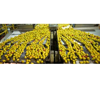 Industrial wastewater solutions for fruits and vegetables processing sector - Agriculture