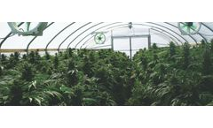 Industrial process solutions for marijuana plant waste sector