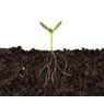 Planting trees and managing soils to sequester carbon
