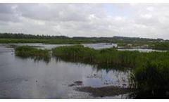 Wetland Restoration Services