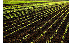 Biofuel and crop research grows by AUS$1.6m