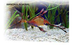 AmmoSorb - Natural Aquarium Ammonia Removal Deco Rock: 50 lb.