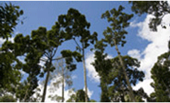 Global forest monitoring to help mitigate climate change