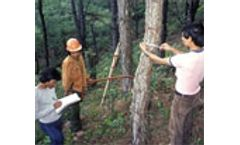 FAO place the spotlight on forest monitoring