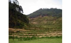 Soil erosion affecting farm productivity in Rwanda