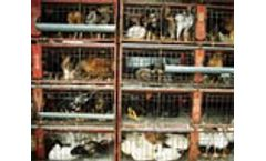 EC proposes clearer and more risk-proportionate rules for animal by-products