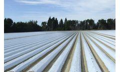 Renewable energy progress report - Press Release