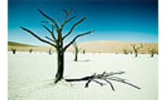 2008 World Day to combat desertification and drought