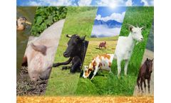 USDA Updates Pandemic Assistance for Livestock, Poultry Contract Producers and Specialty Crop Growers