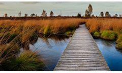 Rutgers NJ Wetlands Management for LSRPs