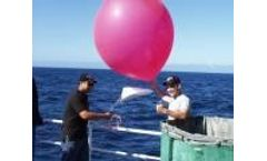 Model 8230 - Weather Balloon, 30 Grams Red