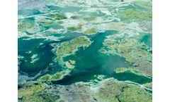 ADS - Harmful Algal Blooms