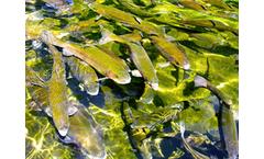 Aquaculture & Aquaponics Services