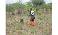 SafeLane - Canine Training