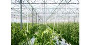 Greenhouse and Field Irrigation Systems