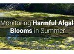 Monitoring Harmful Algal Blooms in Summer