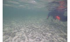Recording Dissolved Oxygen Levels at Spawning Site of Invasive Trout Species