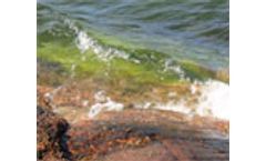 Is iron from soil a factor in algal blooms?