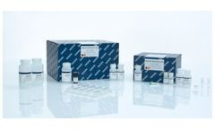 QIAamp - Model DNA Mini Kit - Bacterial Or Genomic DNA Purification From Water, Filters, Or Surface Swab