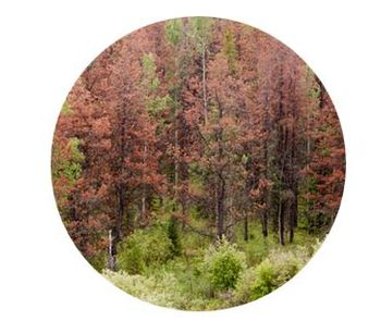 Environmental Data Technology for Land / Resource Management - Environmental - Landscape