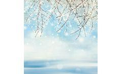 Winter Wetland Trees Online Workshop