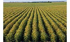 EU approves BP-DuPont biofuels venture