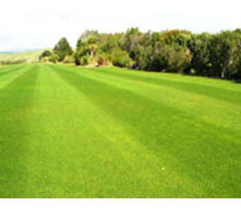Quality Turf Grass & Foliage Maintenance Services