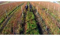 Aggreko: Yealands Winery Case Study - Video