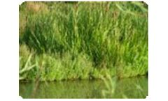 Floating Islands & Floating Treatment Wetlands
