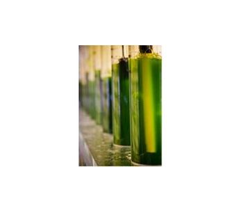Algae - Algae Green Crude