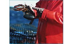 Underwater solutions for the fishing & aquaculture industry