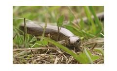 Ecology & Biodiversity Services