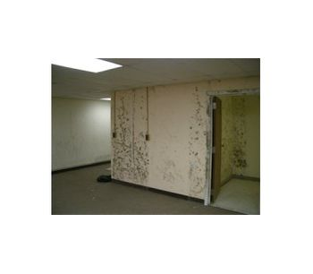 Toxic Mold Remediation Services