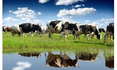 Wastewater Monitoring for Dairy Industry - Real-time BOD, COD, TSS