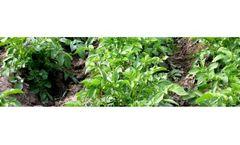 Soil Sampling for Nutrient Management Services