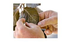 Insect & Tree Disease Management
