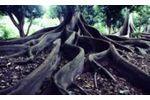 Environmental management for organizations