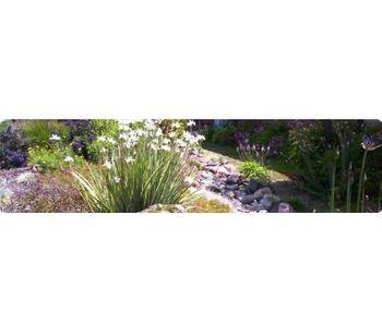 Landscape Design and Installation Services